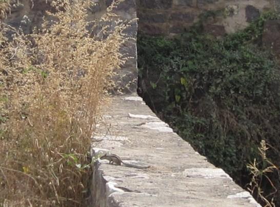 inde20100692.jpg