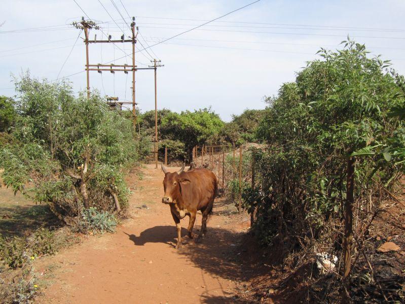 inde20101401.jpg